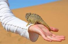 Living Dune Tour with Charlys Desert Tours